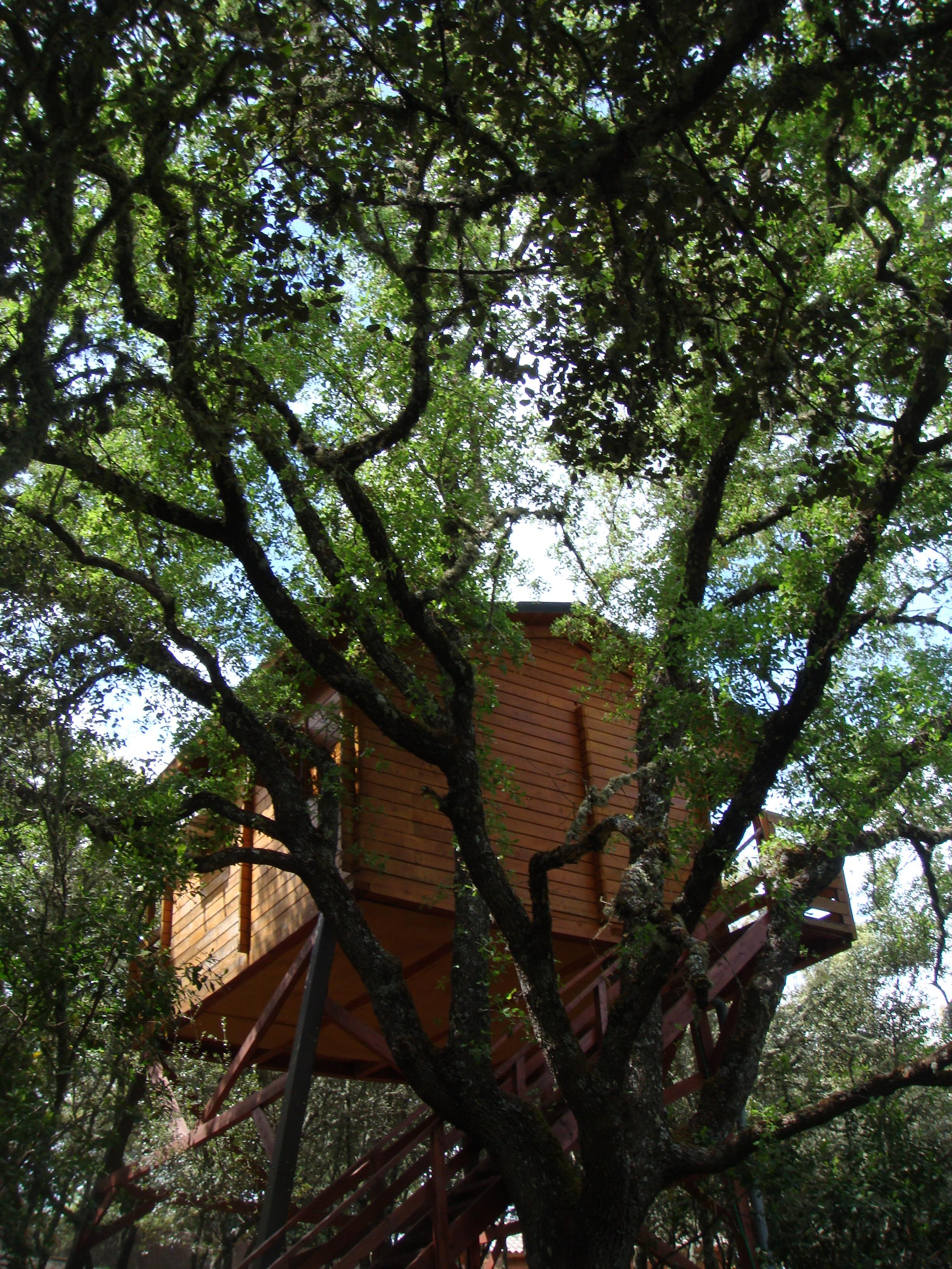 Una cabaña en un árbol turismo ecológico rural excursiones