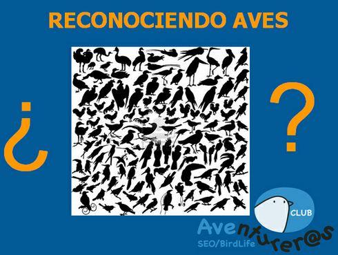 Sociedad Española de Ornitología (SEO/Birdlife) nos presenta el juego RECONOCIENDO A LAS AVES