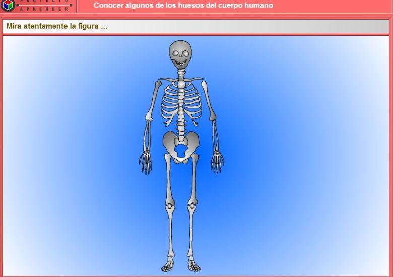 huesoscuerpohumano